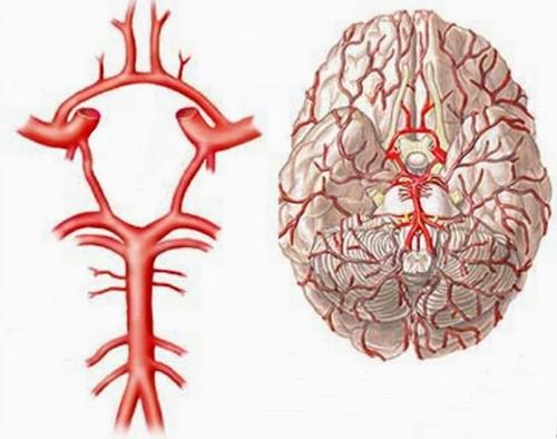 кровообращение головного мозга